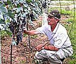 Angheben Vinhos Finos